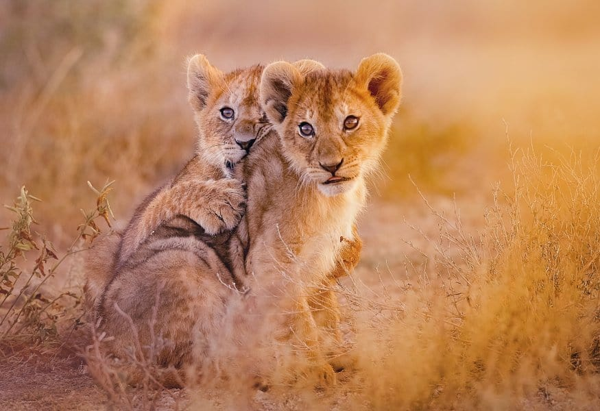 Luxusreisen Namibia